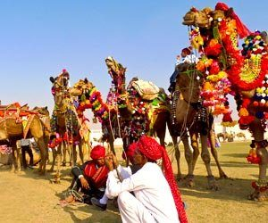 Pushkar Mela: Largest camel trading fair in the world: