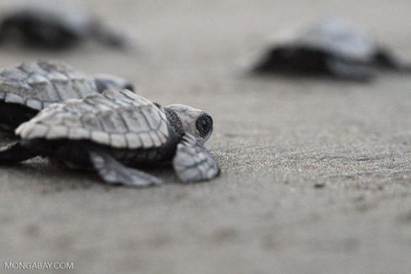 The turtle beaches