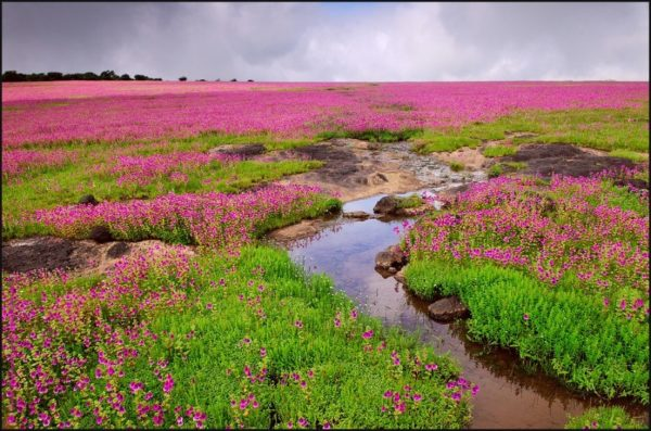 Serenic view of plateau during monsoonat valley of flowers