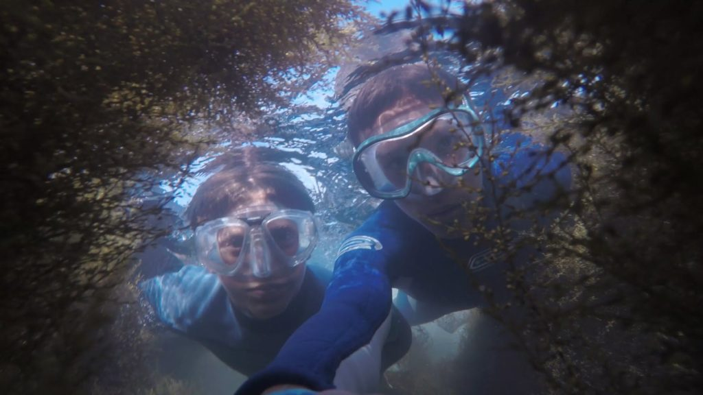 representative image of snorkeling under water